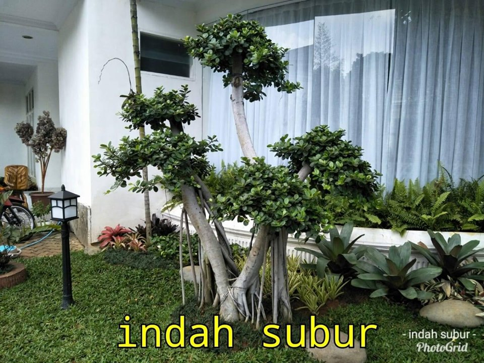 Tukang Taman Bogor