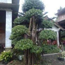 Tukang Taman Cakung